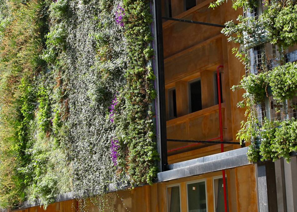 Revestiment paret vegetal Babylon