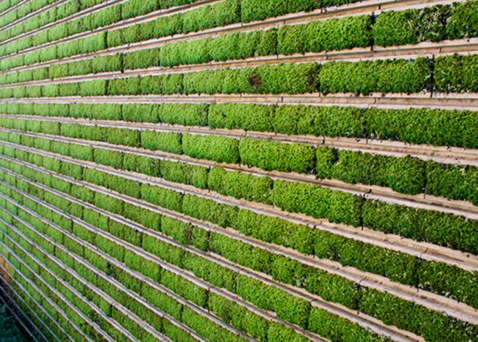 Revestiment paret vegetal Géomoss
